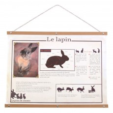 Affichette R&eacute;tro - Le Lapin