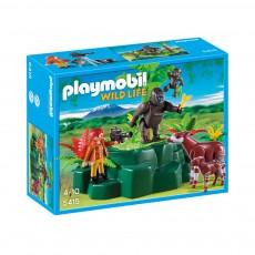 Gorilles et okapis avec végétation  réf.5415