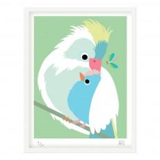 Affiche perroquet 30x40 cm Multicolore