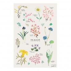 Poster fleurs Tinou le Joly Sénoville Multicolore