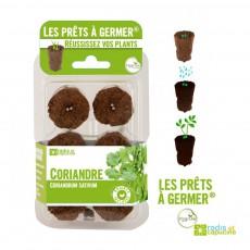 Prêts à germer de coriandre Vert