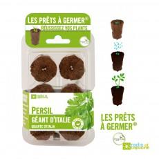 Prêts à germer de persil géant Italie Vert