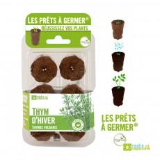 Prêts à germer thym prêts à germer Vert